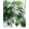 Искусственные пальмовые ветки и листья