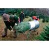Оборудование для упаковки ёлок - Тоннель для упаковки ёлок
