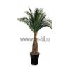 Искусственные и стабилизированные пальмы