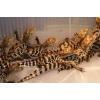 Продаю нильских крокодилов и кайманов