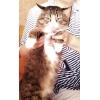 Сибирский котик-умница ищет дом