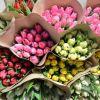 Тюльпаны оптом. хранение бесплатно